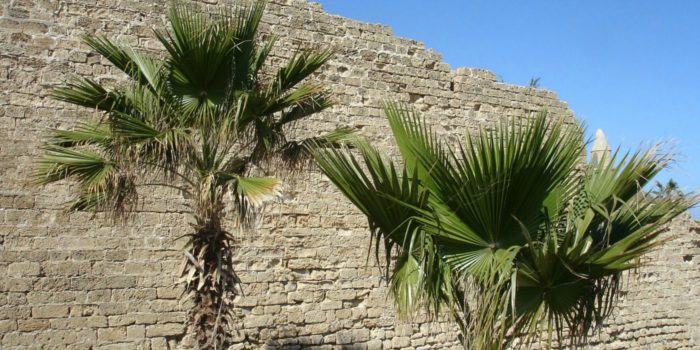 Bad Girls of the Bible | Rahab | Palm Trees against Wall in Israel